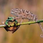 shut up frog